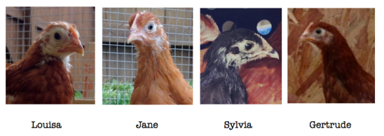 The Ladies of the Yellow Barn Poultry Co.