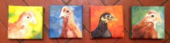 chicken_portraits