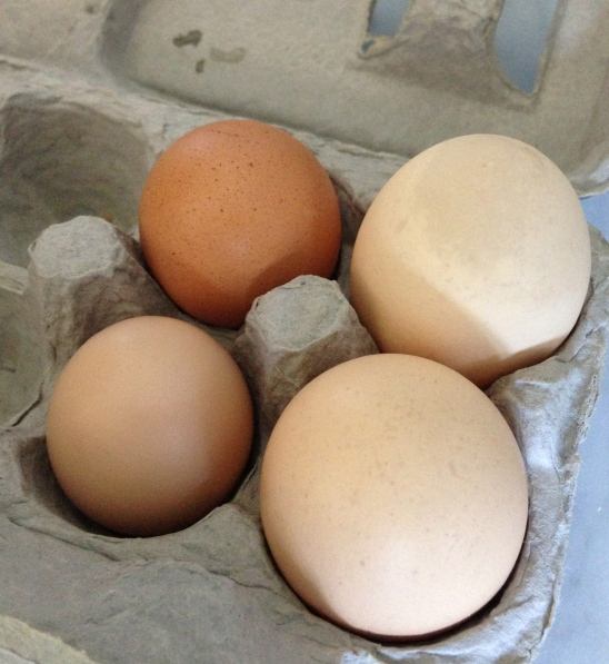 Jane's egg is on the bottom left-hand corner...smaller than the other three eggs purchased at the grocery store.