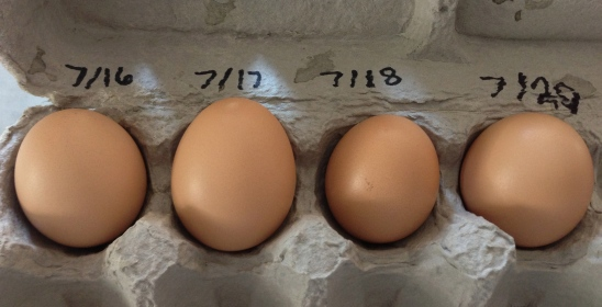 Eggs 1 through 4, labeled by date.  I know we won't always be able to do this record keeping system for every egg, but for now, it's lots of fun.