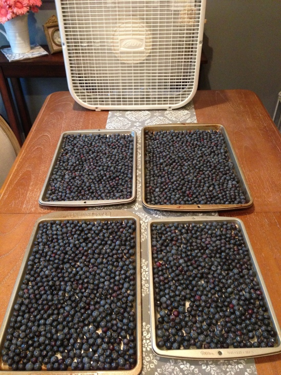 Fan? Check.  Pans of berries? Check.